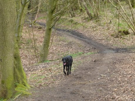 Dog walking in the woods