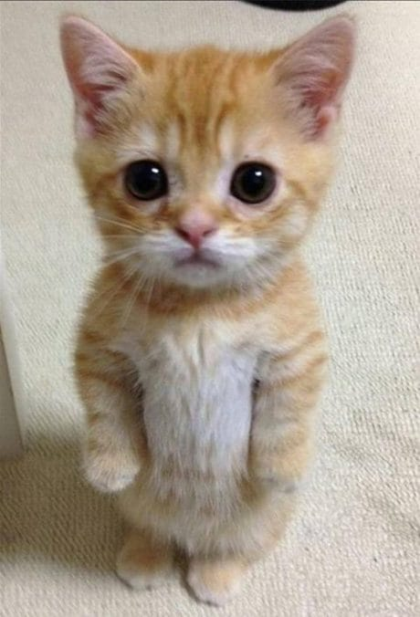 Cute kitten standing on its hind legs