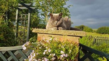 Jane, a little blind cat enjoying the sunshine