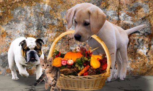 Dogs and cat with autumn produce