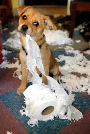 A dog chewing a toilet roll