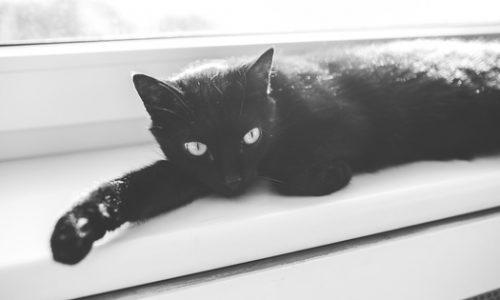 Black cat laid on window sill