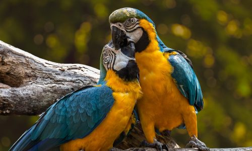 Two parrots in the wild