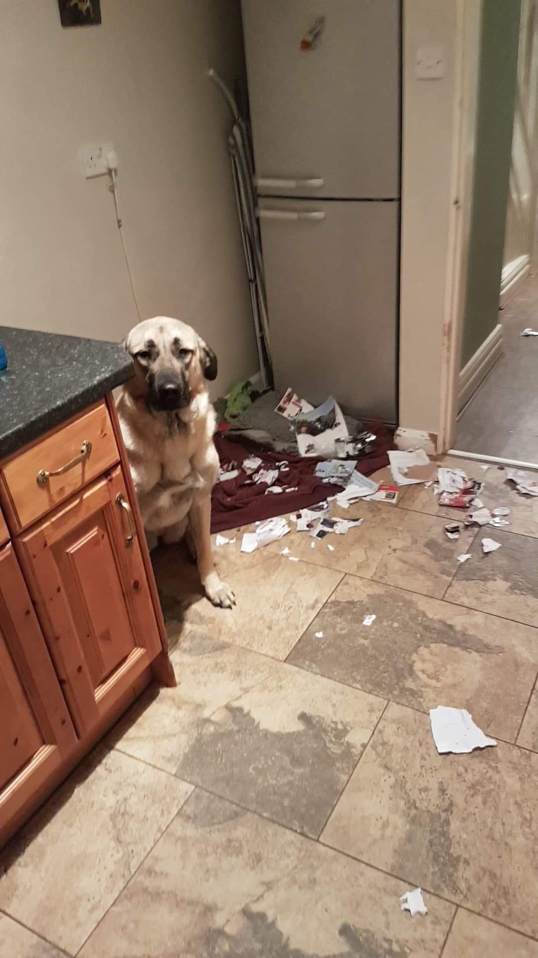 Dog destroying house due to anxiety when left alone