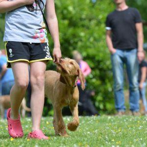 Dog training using treats