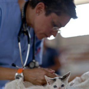 Kitten being handled by vet