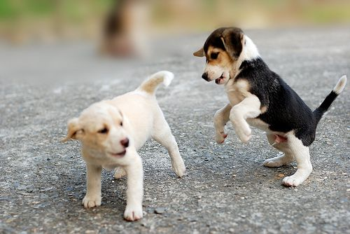 Puppies looking cute and playing together
