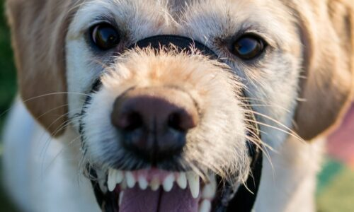 This image shows a dog baring its teeth
