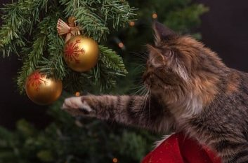 Cat playing with baubles on Christmas tree