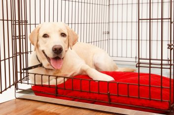 Crate-Training-a-Puppy