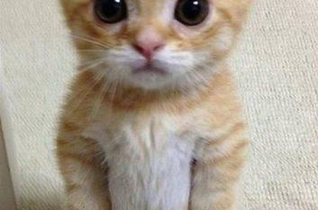 Cute kitten standing on its hind legs