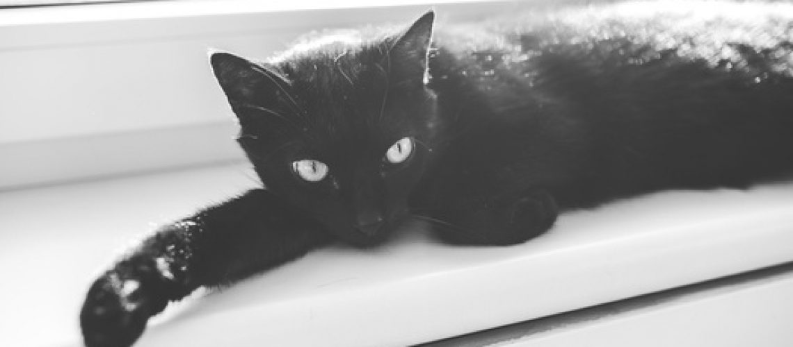 Black cat laid on window sill