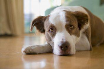 dog-1224267_1280