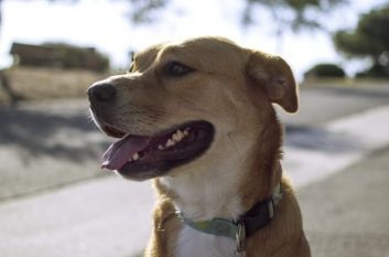 Dog with happy expression