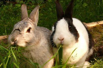 hare-595136_640