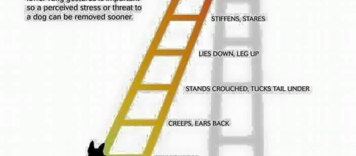 ladder of aggression