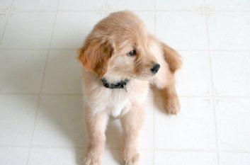 Puppy looking cute